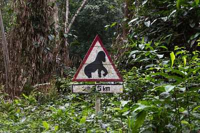 Road sign, Yield to Gorillas.  Republic of Congo , Ndzehi Concession Department of Cuvette-Quest.