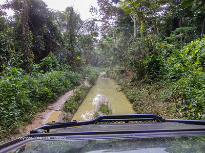 Swampy roads in the dry season, Odzala-Kokoua National Park, Republic of Congo