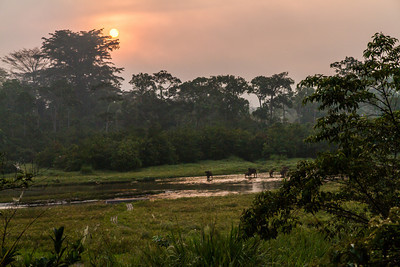 Early morning sunrise of the Lango Bai and Forest Buffalo from the main deck of the Odzala Wildeness Lango camp, Odzala-Kokoua National Park, Mboko concession, Republic of Congo