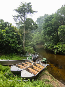 Mboko boat launch on the Likeni River just up river from where the Lekeni flows into the Lekoli river. Odzala-Kokoua National Park, Mboko concession, Department of Cuvette-Quest, Republic of Congo.
