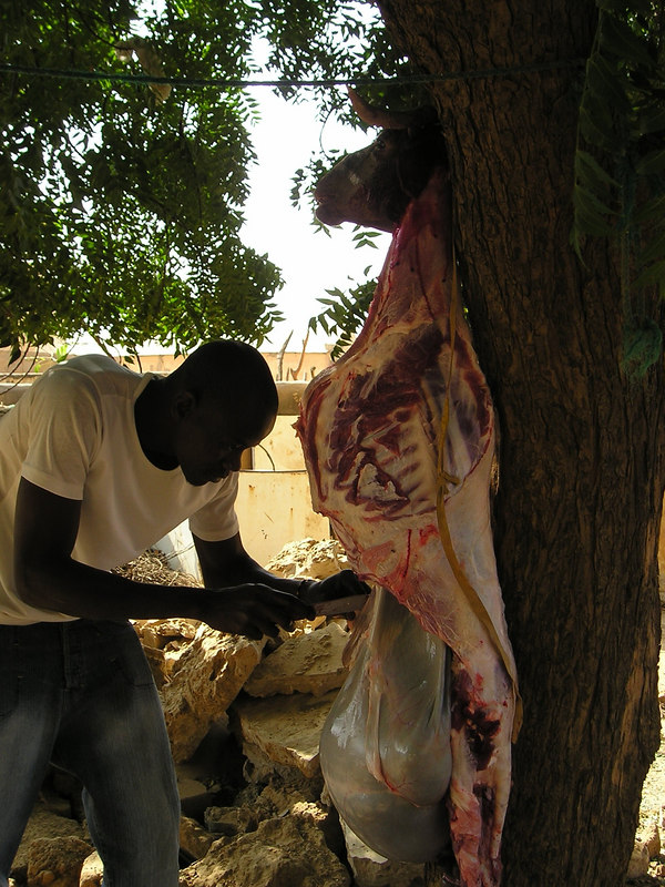 Slaughtering the sheep for eid while we were in Mbagne.