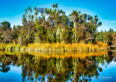 Flax bushes, Cabbage trees, rushes  and other vegetation reflected in the still waters of Okarito Lagoon