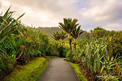 Punakaiki scenic walkway