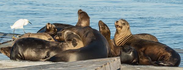 Sea Lion Boat Tour San Diego June 20 2014 004