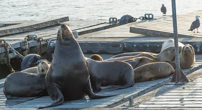 Sea Lion Boat Tour San Diego June 20 2014 003