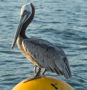 Sea Lion Boat Tour San Diego June 20 2014 008