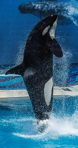 Sea World San Diego June 21 2014 011
