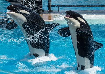 Sea World San Diego June 21 2014 009