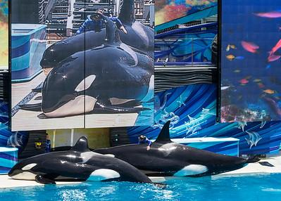 Sea World San Diego June 21 2014 010