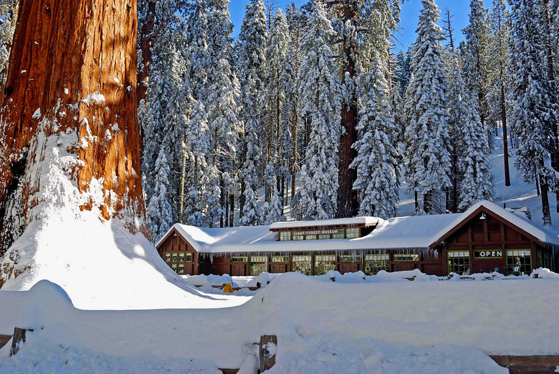 Sequoia National Park winter
