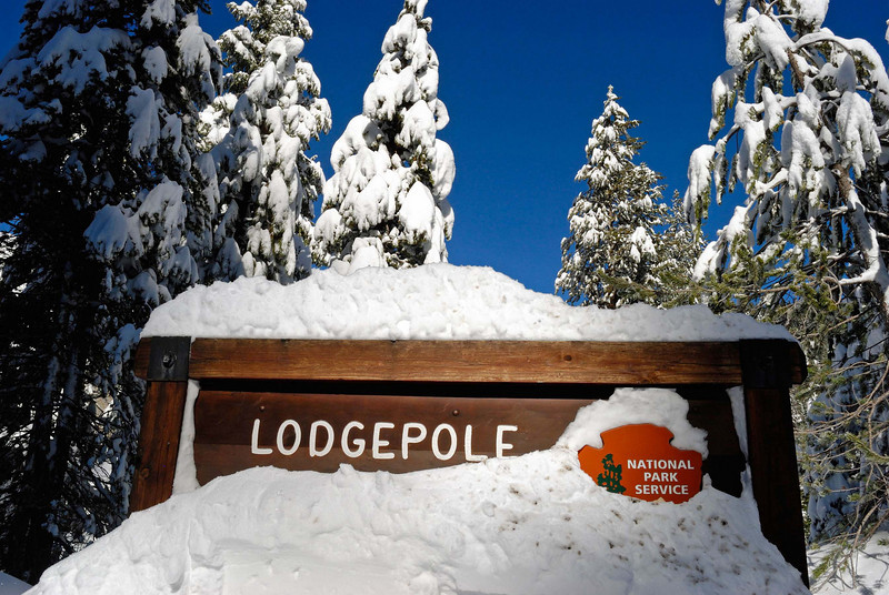 LodgePole, Sequoia