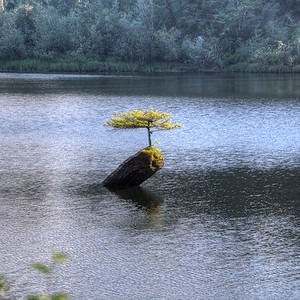 """Fairy Lake - Vancouver Island, BC, Canada Visit our blog """"The Cycle Of Life"""" for the story behind the photo."""