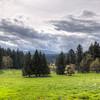 Pastoral Landscape - Cedar, Vancouver Island, British Columbia, Canada