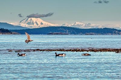 Mt Baker & Haro Strait