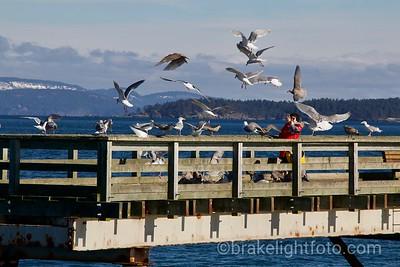 Sidney Fishing Pier
