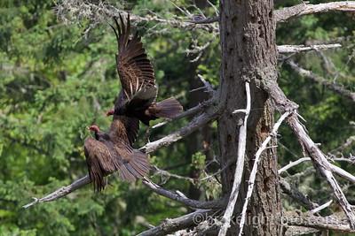 John Dean Provincial Park