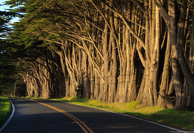Point Reyes NS Area