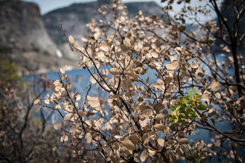 Hetch Hetchy - Lake and Leaves-6636
