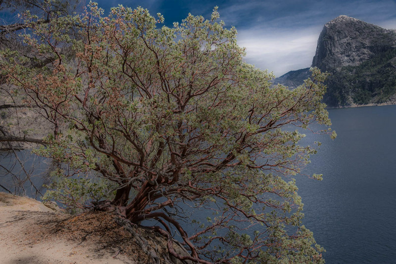 Hetch Hetchy - Tree-6646