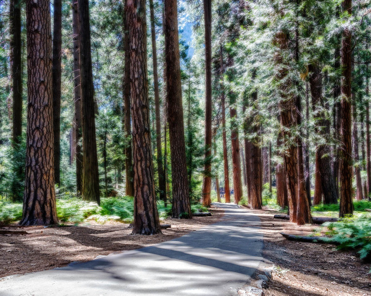 Yosemite - Redwoods-2