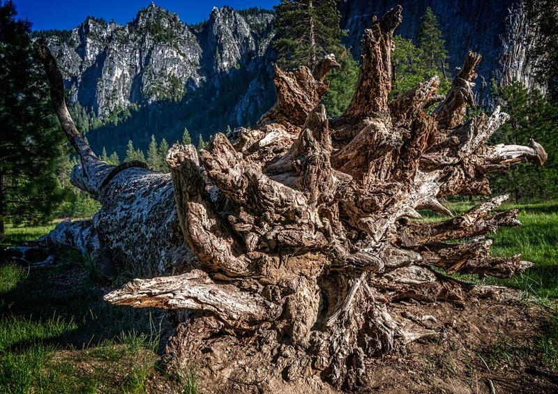 Fallen Tree-