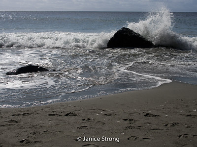 Janice-Strong-Vancouver Island-1032