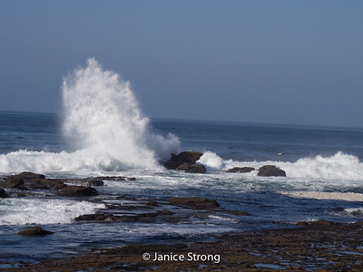Janice-Strong-Vancouver Island-1064