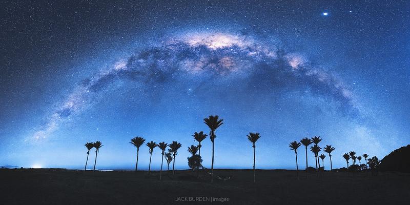 Karamea Nikau Under The Milky Way