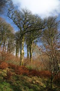 Trees at Simonsbath