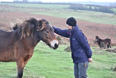 Bundy with Exmoor pony