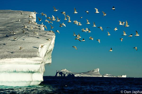 West Greenland 2017