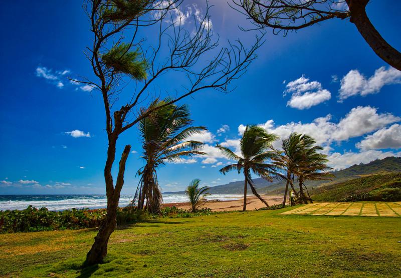 Barbados-104