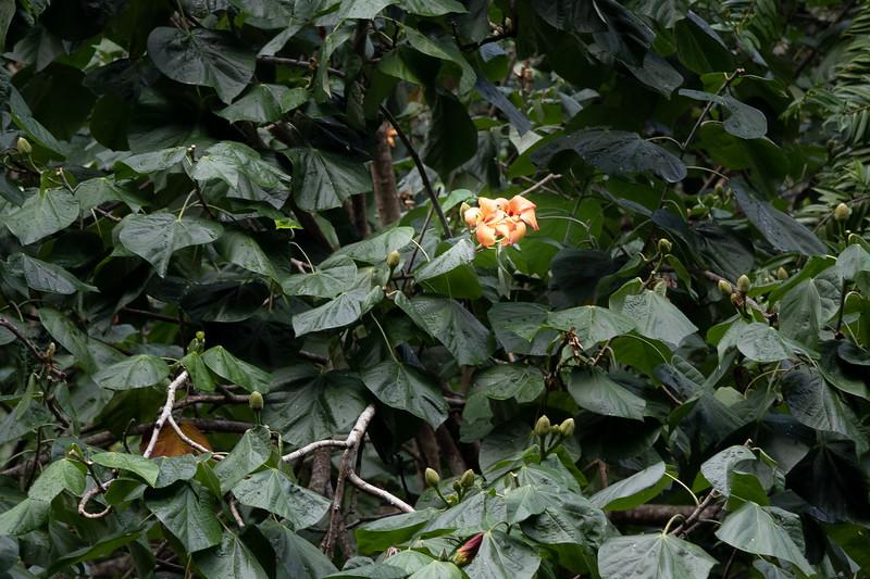 St. Lucia - Rainforest