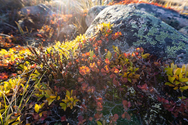 Autumn colours, Iqaluit, Nunavut