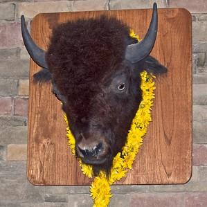 Buffalo Mountain Celebration of Life