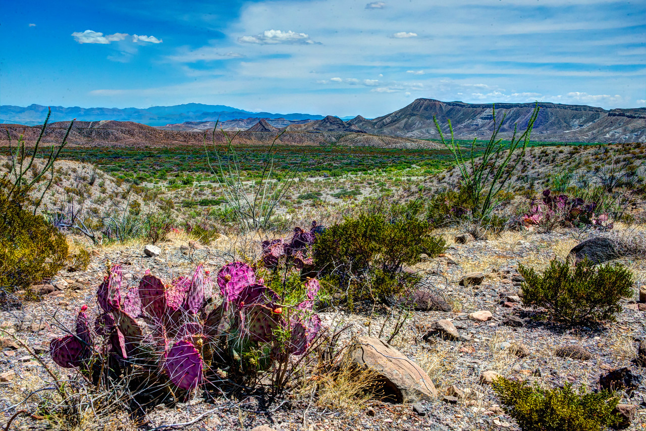 Desert colors, Big Bend Ranch State Park