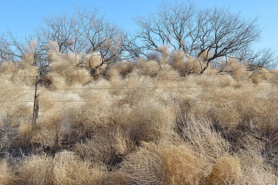 Tumbleweeds, West Texas