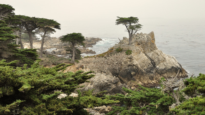 The Lone Cypress Tree at Pebble Beach. Monterey Bay, California.