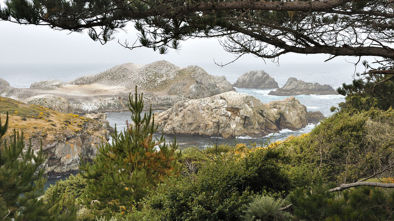Point Lobos State Reserve, California.