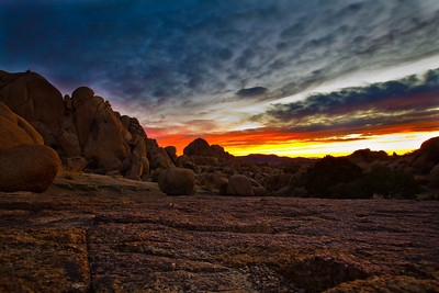 Joshua_Tree_Sunrise-005-1235328679-O