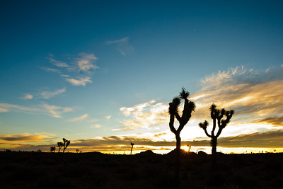 Joshua_Tree_Sunrise-012-1235476659-O