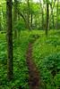 Appalachian Trail on Peters Mountain in Monroe Co, WV.