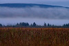 Fog lifting Canaan Valley.................................To purchase print or digital file e mail DFriend150@gmail.com