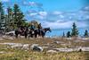 Three horse rides at Dolly Sods
