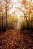 Trail to follow
