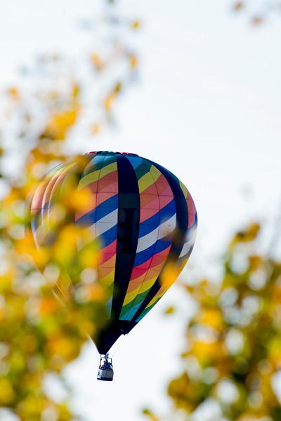 Multi colored hot air balloon through the trees