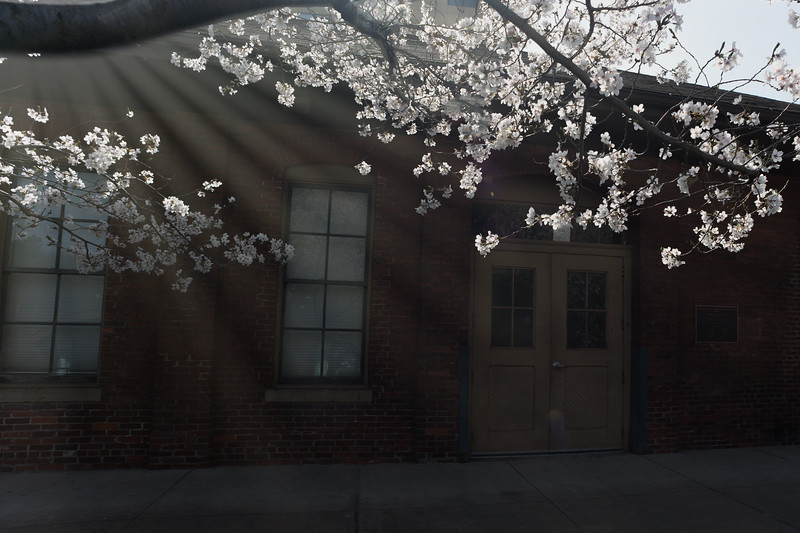 Shaft of light with dogwood flowers blooming -  to purchase contact Dan Friend DFriend150@gmail.com