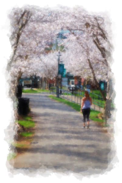 Walking under the cherry blossoms