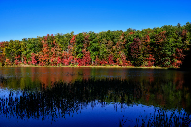 Lake fall scene on lake