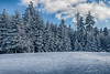 Frozen trees along the ski trail with blue sky